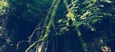 Covid 19 et promenades en forêt