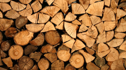 Vente publique de coupes de bois